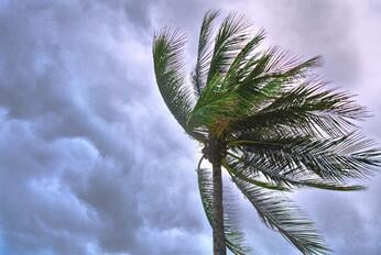 cloudy beach palm tree blowing in wind