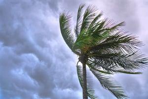 Prepare for a Tropical Storm
